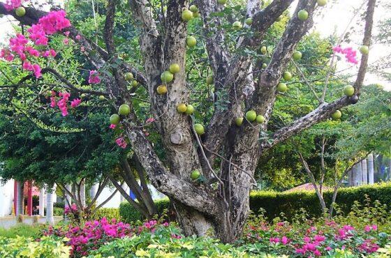 Nothing But Accolades for the Royal Decameron Salinitas Resort